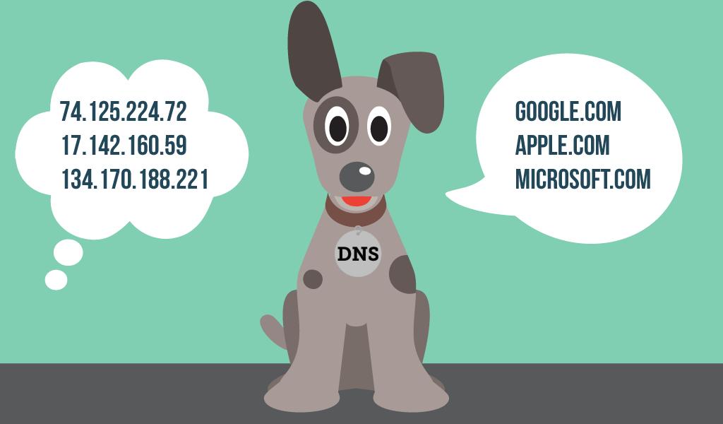 dog_dns