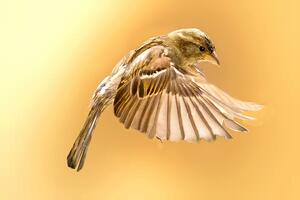 New Silver Sparrow Malware Infects 30,000 Macs
